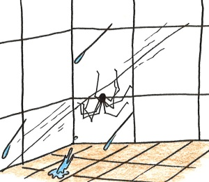 Cartoon of a daddy long legs spider hanging upside down on a thread in the shower.